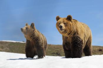 Amelia und Meimo entdecken das Außengehege im Arosa Bärenland.