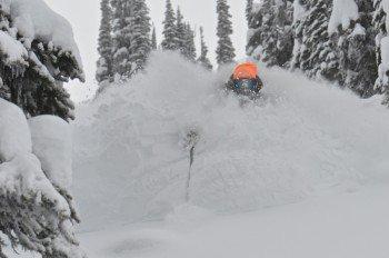 Ein Traum: Tree Skiing in Champagne-Powder