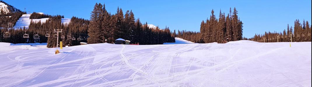 Grüne Pisten im Skigebiet Marmot Basin in Jasper in Kanada.