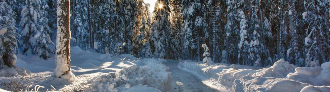 Auf Schlittschuhen durchs Winterwunderland - das gibt's so nur im Unterengadin!