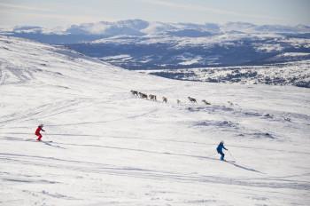 In Åre können dir auf der Piste schon mal Rentiere begegnen.
