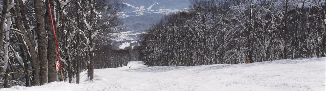 Auf den flachen breiten Hängen können auch Anfänger gut Skifahren.