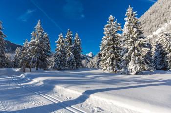 130 vielfältige Loipenkilometer führen durch den unberührten Winterwald, über Wiesen und Felder.