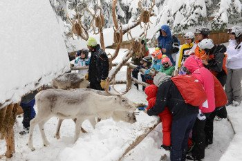 An der Bergstation Rotwand kann man die Rentiere füttern.