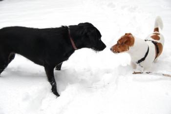 Winter-Aktivurlaub mit Hund