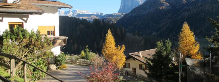 Am Waldesrand mit Blick auf den Dolomiten