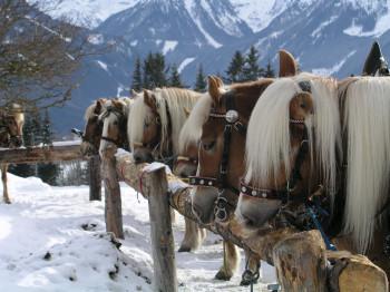 Pferdeschlitten