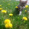 Katzen tummeln sich am Hof