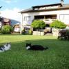 our cats - Haus Scheiblauer