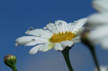 Wunderschöne Blumenpracht