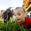 Die Kinder können im Sommer bei uns am Abelhof Ponyreiten.