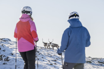 You might even come across some elks while you're skiing.