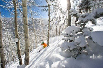 Tree skiing holds a special place in the hearts of skiers across the world.