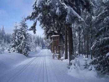 Cross-country skiers will find beautiful trails around Carlsfeld.