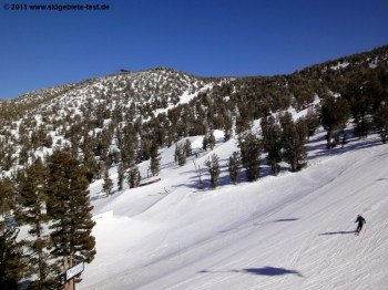 The woods in the upper part of the resort are perfect for tree-skiing.