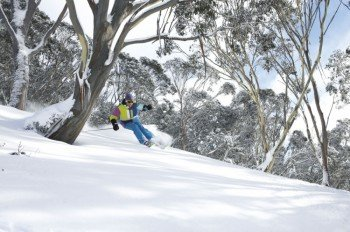 Mt Hotham offers great backcountry skiing and boarding with many of the trails being tree lined.