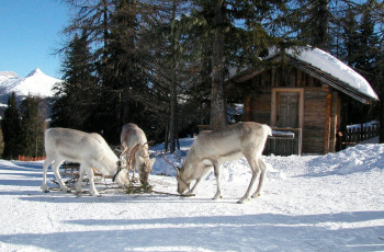 Italy's only herd of reindeer lives here.