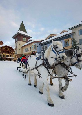 From dog sled tours to horse drawn sleigh rides, Sun Peaks offers unique experiences and activities for every age group.