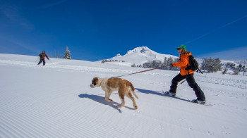 Bring your own snowshoes or rent them from Timberline to enjoy groomed snowshoeing trails around the lodge.