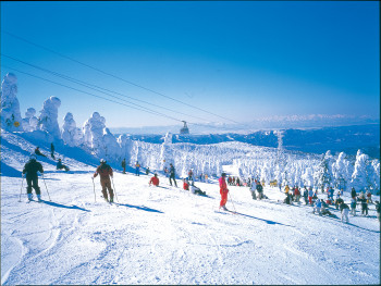 Zao Onsen offers an area of 50 kilometers for skiing and snowboarding.
