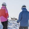 Vielleicht läuft dir beim Skifahren sogar eine Elchherde über den Weg.