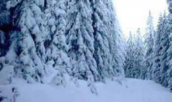 Die verschneite Winterlandschaft in Clausthal-Zellerfeld