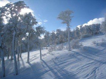 Genieße das Skifahren oder Snowboarden in der verschneiten Winterlandschaft.