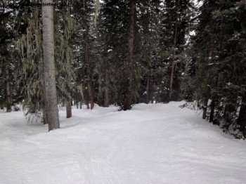 Tree-Skiing in Poet´s Glade!