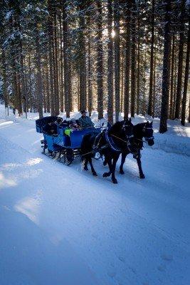 Mit der Kutsche geht es durch das winterliche Filzmoos