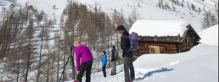 Als Aktivität nach dem Skifahren bietet sich eine Schneeschuhwanderung mit Wildtierbeobachtung wie hier im Nationalpark Hohe Tauern an.