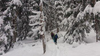 Skitour durch den Wald