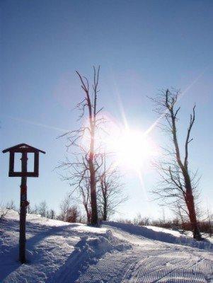 Genieße die verschneite Winterlandschaft.