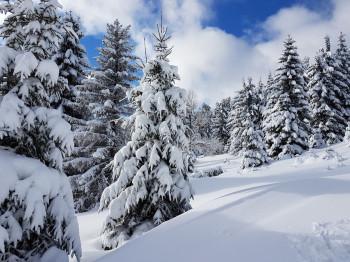 Im Naturschneeparadies Unterberg werden die Pisten nicht künstlich beschneit.