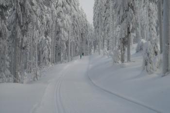 Langlaufen im Arbergebiet rund um das Langlaufzentrum Bayerisch Häusl
