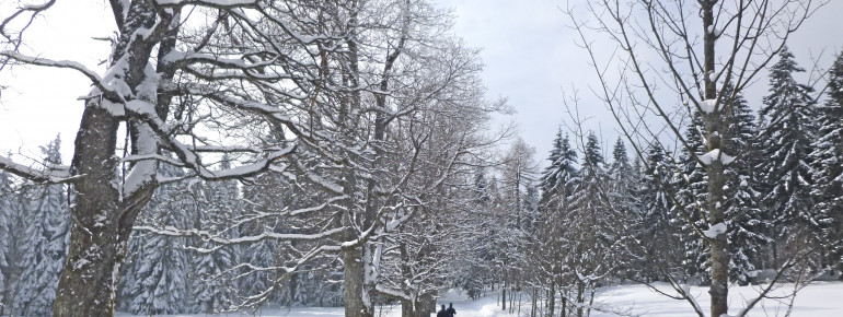 Im Langlaufzentrum Sankt Englmar kannst du klassisch langlaufen, aber auch skaten.