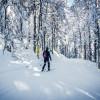 Die klassisch, aber auch für Skater gespurten Loipen führen dich durch die verschneiten Wälder des Hochschwarzwaldes.