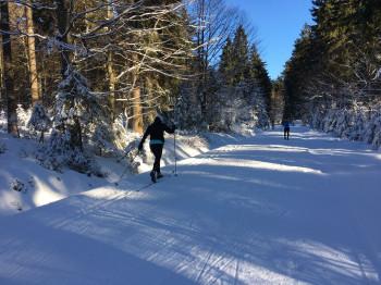Im Langlaufzentrum Grainet-Obergrainet-Haidel ist klassisches Langlaufen, aber auch Skating möglich.