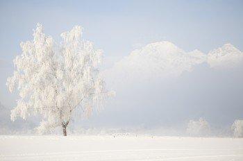 Traumhafte Winterlandschaften können Langläufer in Saalfelden Leogang erkunden.