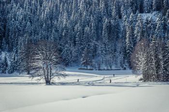 Das Loipennetz schließt an den Fernskiwanderweg Schluchsee-Hinterzarten an.