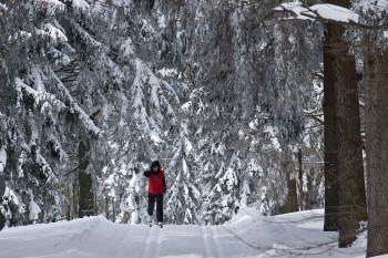 Langlaufen in Waldkirchens verschneiten Wäldern
