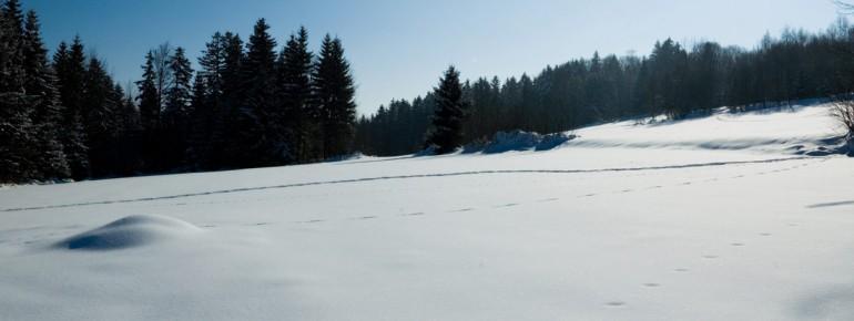Tief verschneit zeigt sich der Winter im Bayerischen Wald