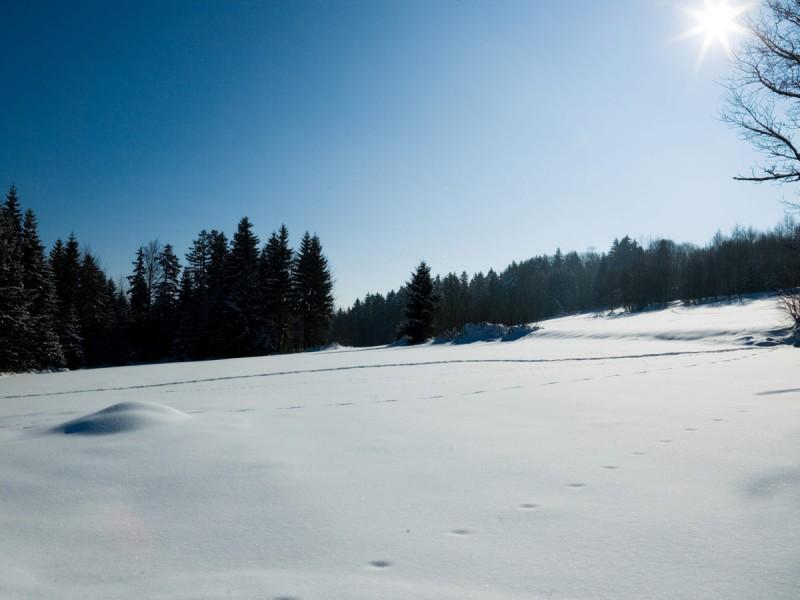 Wetter Furth Im Wald 16 Tage